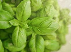 4 Herbs you Can Grow Anywhere
